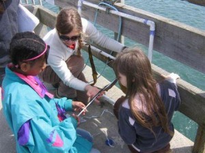Curricula_Kelp project