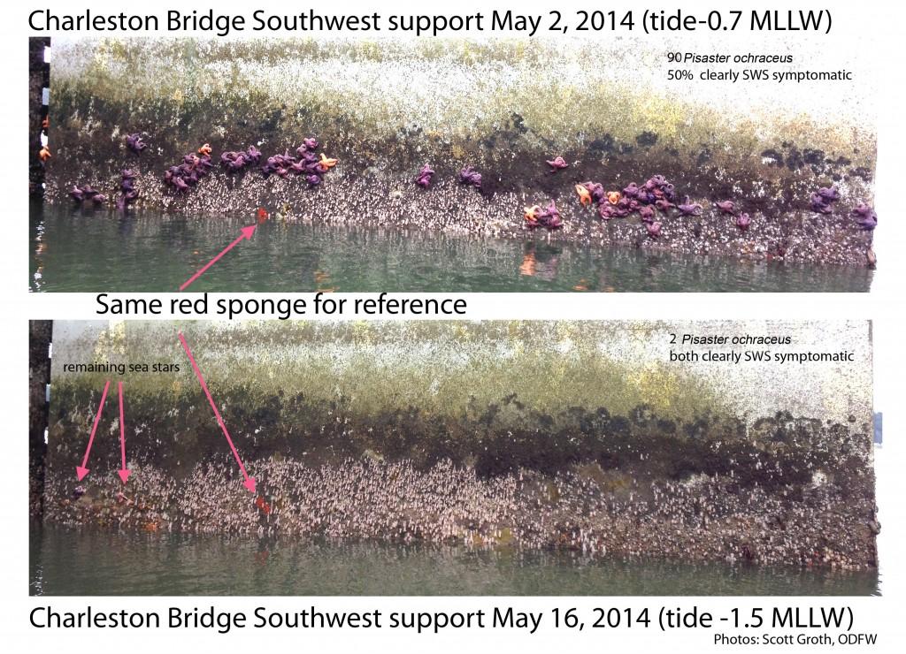 Charleston-Bridge-SWS Scott Groth ODFW corrected