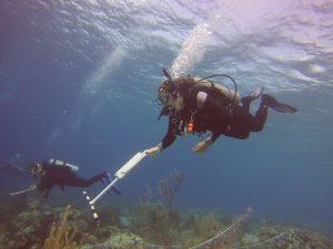 Shannon Diving
